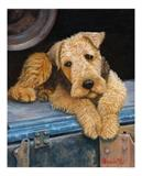 View a Collection of Airedale Terrier Prints - Click Here