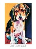 View a Collection of Beagle Prints - Click Here
