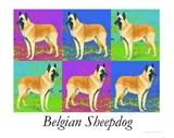 View a Collection of Belgian Sheepdog Prints - Click Here
