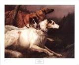 View a Collection of Borzoi Prints - Click Here