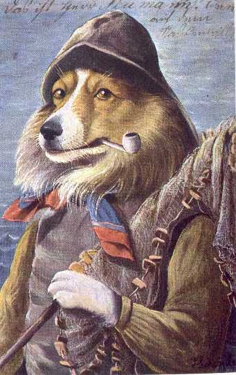 Collie Print - German
