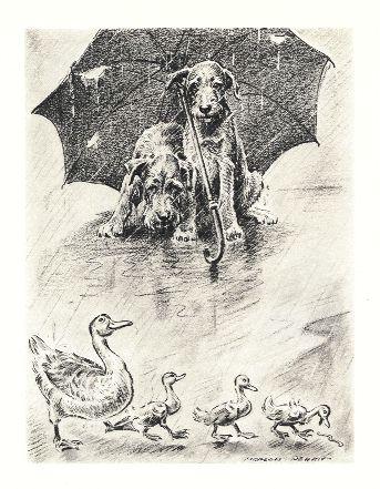 Afghan Hound Dog Print - Pease