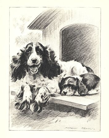 Cocker Spaniel Print - Morgan Dennis