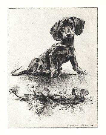 Dachshund Print - Morgan Dennis