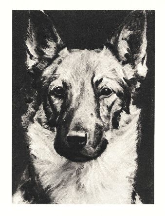 German Shepherd Print - Morgan Dennis
