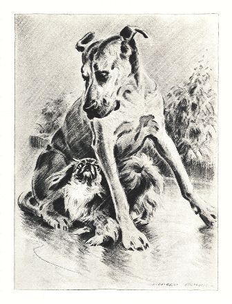 Pekingese Print - Morgan Dennis