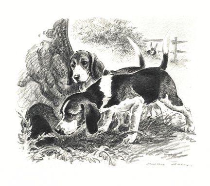 Beagle Print - Morgan Dennis