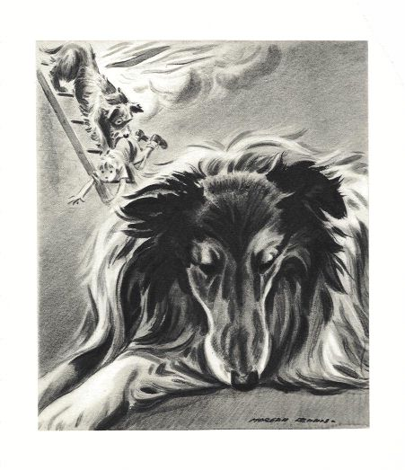 Collie Print - Morgan Dennis