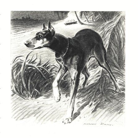 Doberman Pinscher Print - Morgan Dennis