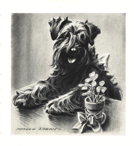 Kerry Blue Terrier Print - Morgan Dennis