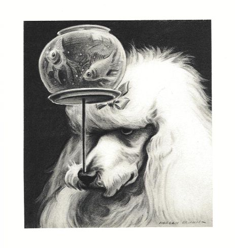 Poodle Print - Morgan Dennis