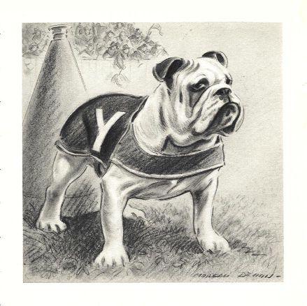 Yale Bulldog Print - Morgan Dennis