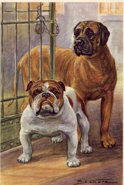 Mastiff Print - German