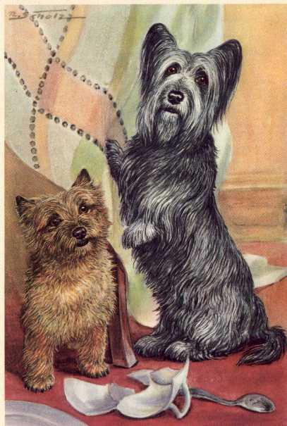 Skye Terrier Print - German