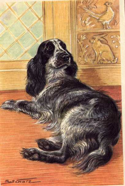 Cocker Spaniel Print - German