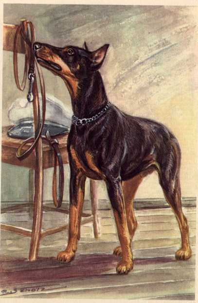 Doberman Pinscher Vintage Dog Art Prints Gifts And