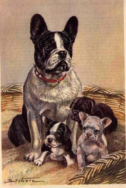 French Bulldog Vintage Dog Art Prints Gifts And Artwork