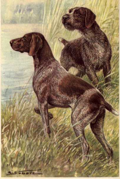German Pointers Print - German