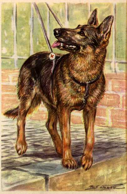 German Shepherd Vintage Dog Art Prints Gifts And Artwork