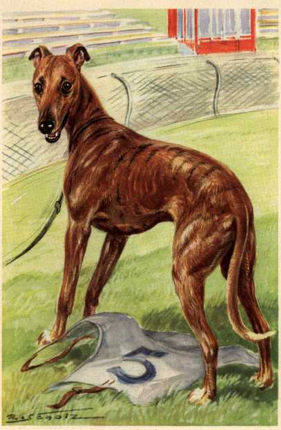 Greyhound Print - German