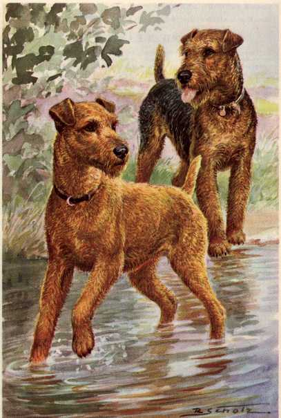 Welsh Terrier Print - German