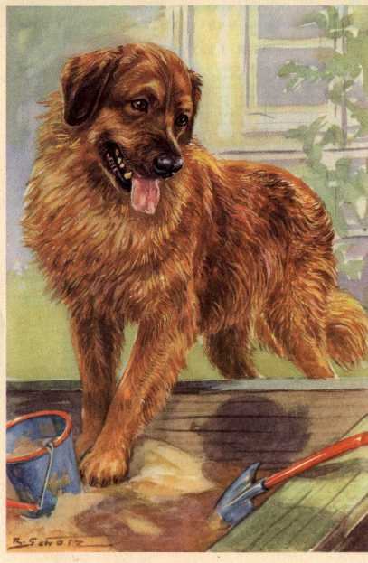 Leonberger Print - German