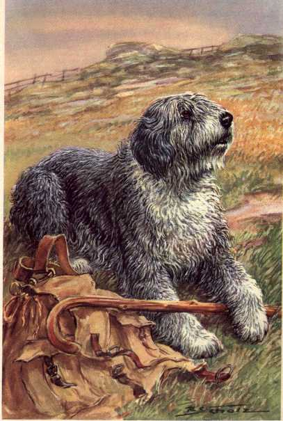 Old English Sheepdog Print - German