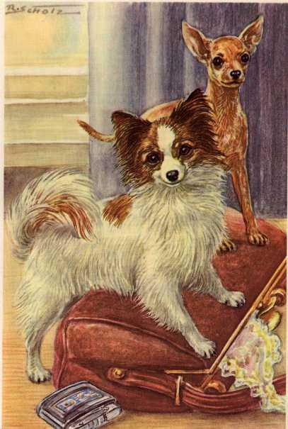Chihuahua Print - German