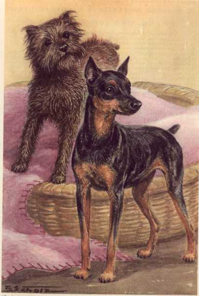 Miniature Pinscher Print - German