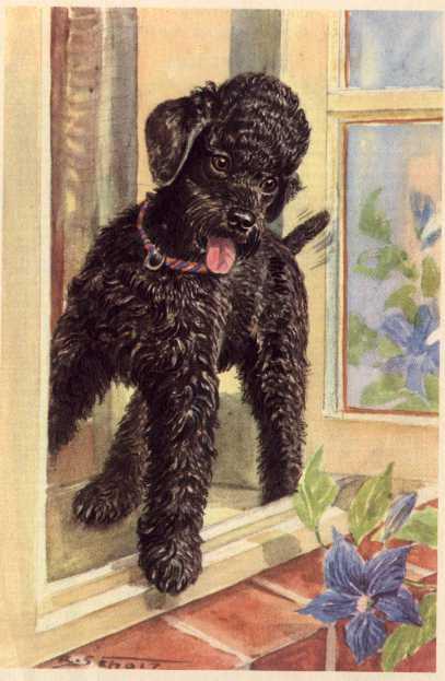 Poodle Print - German