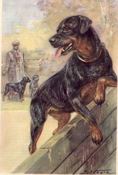 Rottweiler Print - German