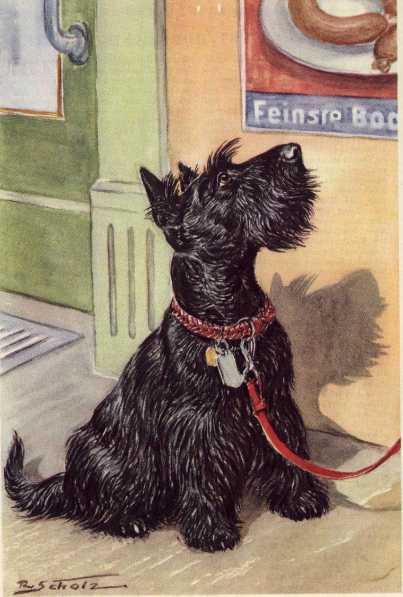 Scottish Terrier Print - German