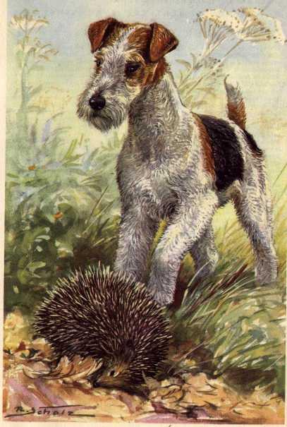 Wire Fox Terrier Print - German