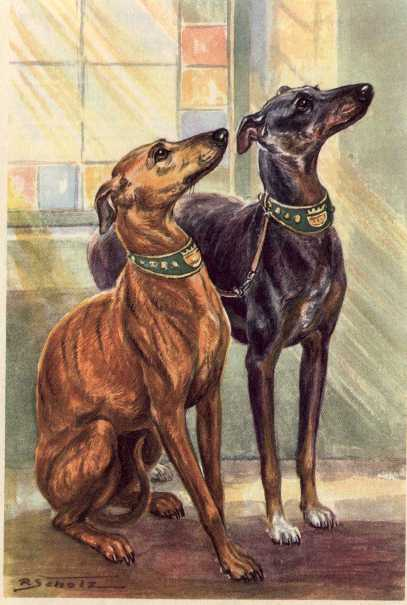 Whippet Vintage Dog Art Prints Gifts And Artwork From