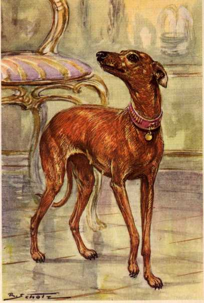 Italian Greyhound Print - German