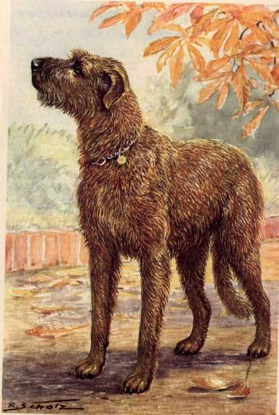 Irish Wolfhound Print - German